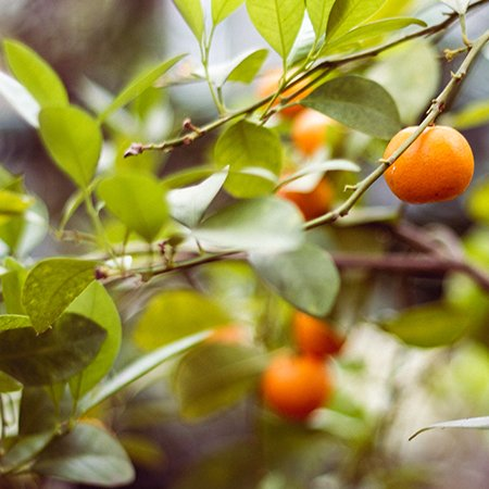Which fruits are good to consume during pregnancy